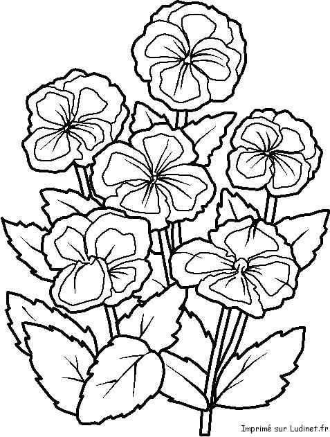 Coloriage Dun Bouquet De Fleurs.Coloriage D Un Bouquet De Fleurs
